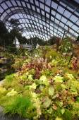 Cloud Forest at Gardens by the Bay in Singapore — Stock Photo