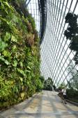 Cloud Forest at Gardens by the Bay — Stock Photo