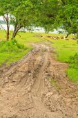 Road mud — Stockfoto