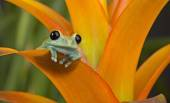 A Frog with a View — Stock Photo