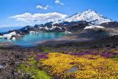 Mount Baker Summer Bloom — Stock Photo