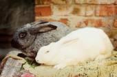 A rabbit farm — Stock Photo