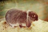 Une ferme de lapin — Photo