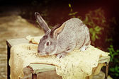 A rabbit farm — Photo