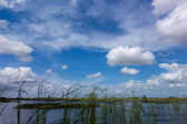 Everglades National Park in Florida — Stock Photo