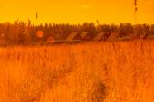 Agricultural landscape in warm tone — Stock Photo