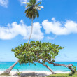 Palm and another small tree, on amazing beautiful tropical beach — Stock Photo #56974597