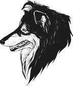 Sheltie shepherd dog — Stock Vector
