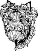 Yorkshire terrier — Stock Vector