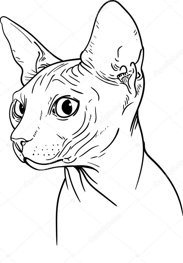 Sphynx Cat Stock Vector 169 Pony Rider 55183793