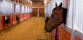 Horse Sticks His Head out Stables Paddock — Stock Photo