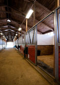Stall Center Path Horse Paddock Equestrian Stable — Stock Photo