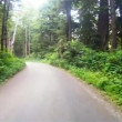 Slow Cruise Into Dense Wooded Forest on Gravel Road — Stock Video #52364525