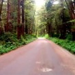 Slow Cruise Into Dense Wooded Forest on Gravel Road — Stock Video #52365371