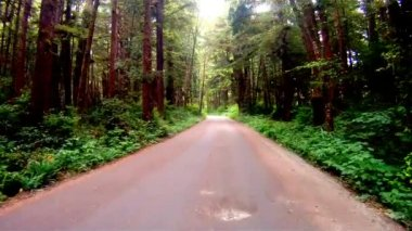 Slow Cruise Into Dense Wooded Forest on Gravel Road — Stock Video