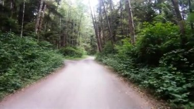 Slow Cruise Through Rain Forest Woods Leads to Fork in the Road — Stock Video