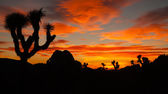 Joshua Tree Sunset Cloud Landscape California National Park — Stock Photo