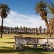 Old Buckboard Covered Wagon Palm Tree Oasis Death Valley — Stock Photo #59237219