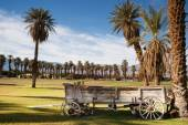 Old Buckboard Covered Wagon Palm Tree Oasis Death Valley — Stock Photo