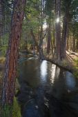 Fast Moving Stream Hat Creek Lassen National Forest — Stock Photo