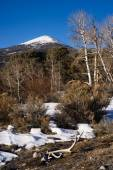 Bald Mountain Great Basin National Park Nevada United States — Stock Photo