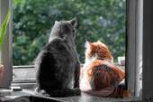 Grey and red cats on window  — Stock Photo