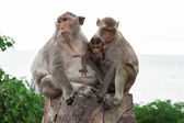 Семейство обезьян — Стоковое фото