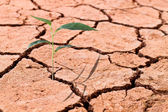 Young plant growing on cracked soil — Stock Photo