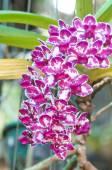 Hermosas orquídeas — Foto de Stock