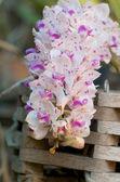 Piękne storczyki — Zdjęcie stockowe