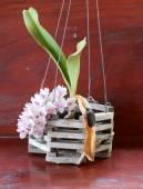 Orchidea roślina — Zdjęcie stockowe