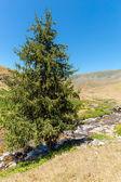 Assy plateau in Tien-Shan mountain in Almaty — Stock Photo