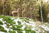 滑雪胜地森林故事哈萨克斯坦阿拉木图镇附近 — 图库照片