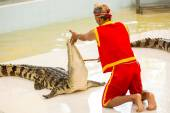 Show of crocodiles, Thailand — Stock Photo