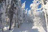 Trees covered with snow in Sunny weather — Foto Stock