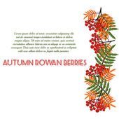 Autumn pattern with rowan berries. Nature background.  Fall colorful floral background. Elegant floral  pattern — Stock Vector
