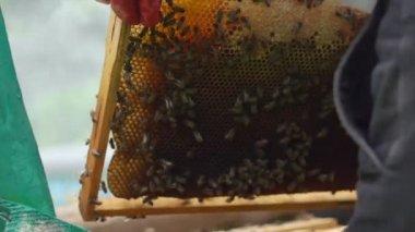 Beekeeper gets honeycomb — Stock Video