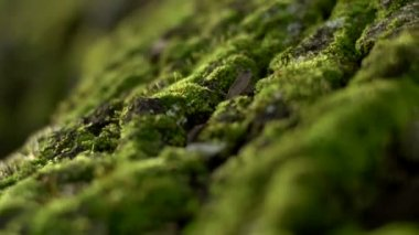 Trunk of mossy tree — Stock video