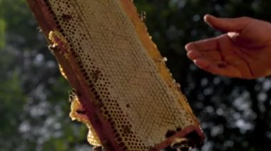 Beekeeper gets honeycomb — Stok video