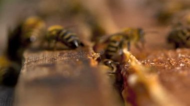 Bees convert nectar into honey — Stock Video