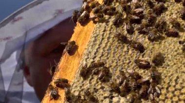 Bijen zwermen op een honingraat — Stockvideo