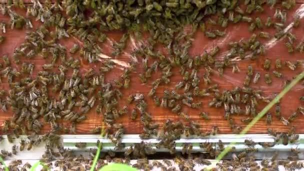 Cerca de las abejas y una colmena — Vídeo de stock