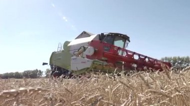 Combine harvester harvesting wheat — Stock Video