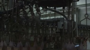 Chicken processing at the factory — Stock Video