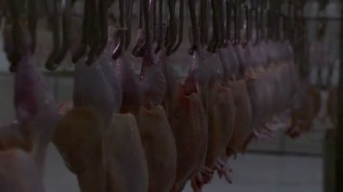 Chicken processing at the factory — Vídeo stock