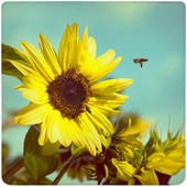 Sunflower on old, yellowed paper background — Stock Photo
