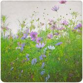 Wildflower meadow background — Stock Photo