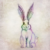 Colorful rabbit drawing — Stock Photo