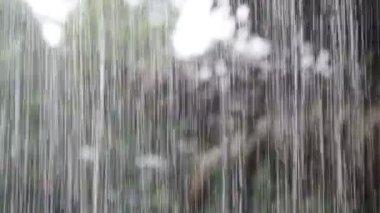 Rain in the tropics — Stock Video
