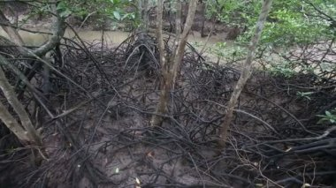 Stream flöden av rotsystemet av mangrove — Stockvideo